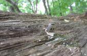 Crear una gota muerta de la USB en la naturaleza