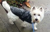 Chaqueta de lluvia perrito barato rápido