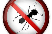 Repelente de hormigas método '' Natural'' * 10 segundo de necesidad sólo se
