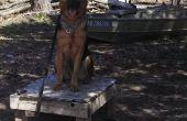 Fácil formación de perro con una tabla de plotz