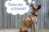 Cómo elegir un segundo perro
