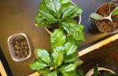 Cómo mantener viva una planta de la casa