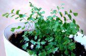 Cómo crecer helechos de esporas