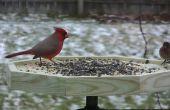 Alimentador de aves foto puerto