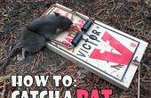 Cómo coger a una rata