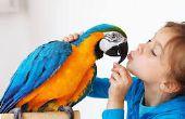 Cómo enlazar con sus pájaros del animal doméstico