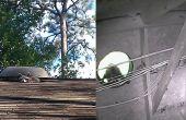 Cómo quitar un mapache del ático - lo humano