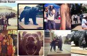 Recuperar las últimas imágenes de Instagram de ubicaciones geográficas
