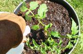 Cómo construir un contenedor Simple y básica tomate doble con tanque de agua