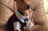 Negocio equipo de perro