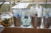 Jardín de lechuga hidropónica con botellas de plástico (botellas de crecer)
