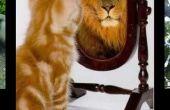 Cómo hacer un gato vivo León fácil rápido!!!!