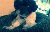 Almohadilla del perro con un viejo suéter y almohada y nadar tallarines