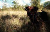 Hound al sabueso de los Baskerville: mascota foto editar