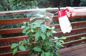 Plaguicidas orgánicos y fungicida en spray