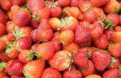 Fresas (foto concurso rojo semana)
