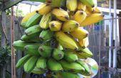 Fritas de plátano verde