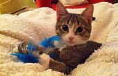 Pluma-en-un-palo gato juguete