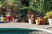 Jardinería con plantas crasas