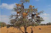 Cómo subir un árbol