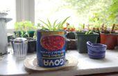 Cómo hacer un jardín de interior