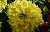 Tomar fotos Macro de flores
