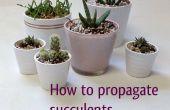 Cómo propagar plantas suculentas