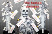 Modelo del esqueleto humano