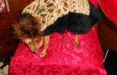 Guepardo elegante largo abrigo con gorro para perros miniatura