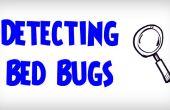 Guía definitiva sobre cómo detectar las chinches de cama | Detección de una infestación de chinches de cama