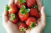 Conservas de fresa ruibarbo