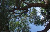 Planta un árbol y ahorro de energía