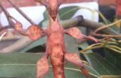 Teniendo cuidado de australiano espinoso hoja insectos
