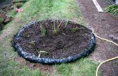 Construir un pantano para plantas carnívoras en su patio trasero! ¿