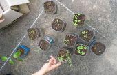 Replantar las plantas