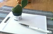 Cómo propagar cactus!!!