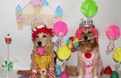 El juego de Candyland viene a vida trajes