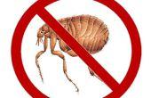 Deshacerse de las pulgas mientras duermes