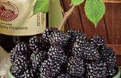 Vino sabroso blackberry caseros