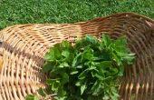 Aceites de hierbas caseras