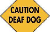 Un Collar de llamada vibrante sordo perro
