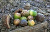 Frutos secos y frutos de mi árbol.