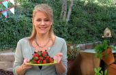 A la brasa Bruschetta de Berry