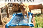 Perro bricolaje piscina