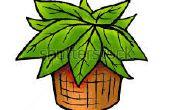 Nivel de agua en las plantas