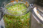 36 Ideas jardín interior fresco alimentos