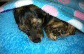 BRICOLAJE cama de perro (o gato)