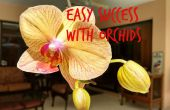 Éxito fácil con orquídeas