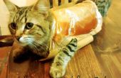 Salvavidas juego para gatos