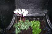 Cómo animar una chimenea en desuso con las plantas.